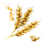 Barley. Malt. Watercolor Royalty Free Stock Images