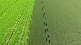 Barley maturing in the summer sun on the island of Gotland stock footage