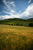 Barley mountain landscape. Field of barley against beautiful mountain landscape Royalty Free Stock Photos