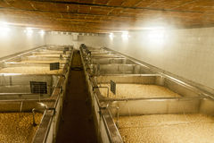 Barley in old brewery in czech republic - ready for beer Stock Photos