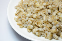 Barley on the plate Stock Images