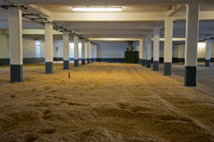 Barley room. Malting barley room of a Scottish distillery Royalty Free Stock Images