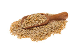 Barley and scoop Stock Photos