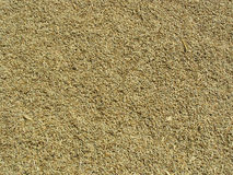 Barley Seeds Background. Background of dried hulled barley seeds Royalty Free Stock Images
