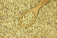 Barley seeds in a wooden spoon background Stock Photo