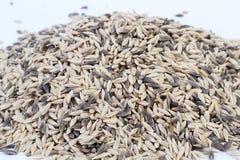 Barley Seeds Stock Photos