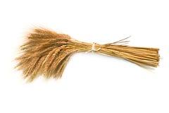 Barley. Sheaf of barley on the white background royalty free stock image