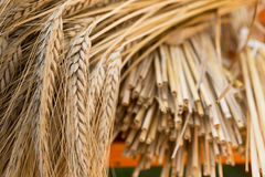 Barley. Sheaf of barley on the wooden desk royalty free stock photography