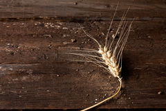 Barley, spike on wood Royalty Free Stock Images