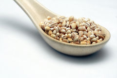Barley on spoon Stock Photo