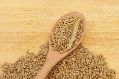 Barley and spoon Royalty Free Stock Photo