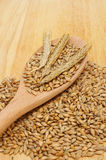 Barley and spoon Stock Photos