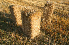 Barley square bales. Three golden barley square bales Stock Photos