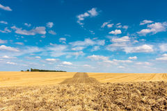 Barley stubble field landscape Stock Images