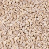 Barley. On the table as a background Royalty Free Stock Photo