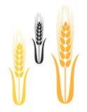Barley. Vector illustration (EPS 10&#x29 Royalty Free Stock Photography
