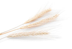 Barley or wheat Royalty Free Stock Photography