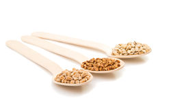 Barley, wheat, buckwheat, oat groats in a wooden spoon isolated Stock Image