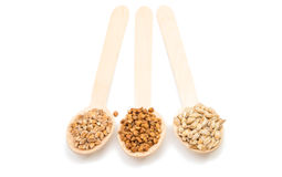 Barley, wheat, buckwheat, oat groats in a wooden spoon isolated Stock Images