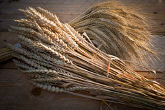 Barley and wheat Stock Images