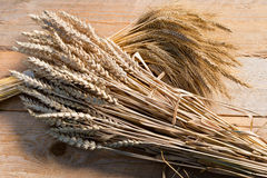 Barley and wheat Royalty Free Stock Photography
