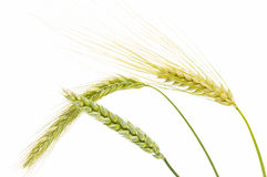 Barley, wheat and rye Stock Photos