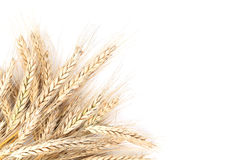 Barley on white Royalty Free Stock Photography