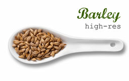 Barley in white porcelain spoon Royalty Free Stock Photo