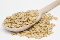 Barley  with a wooden spoon Royalty Free Stock Photo