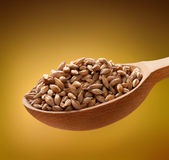Barley in a wooden spoon Royalty Free Stock Photos