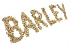 Barley. Written with  grains on white background stock photos