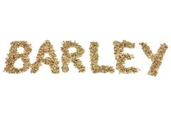 Barley. Written with  grains on white background stock photography