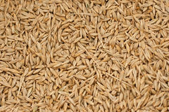 Barleycorn Stock Photos