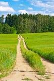Barleycorn field and road Stock Photo