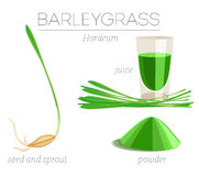 Barleygrass superfood Stock Foto