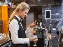 Barmaid pulling a glass of beer Stock Images