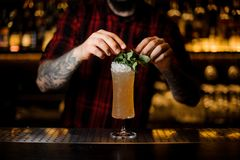 Barman decorating tasty Sherry Cobbler drink in a cocktail glass. With mint leaves on the bar counter royalty free stock photography