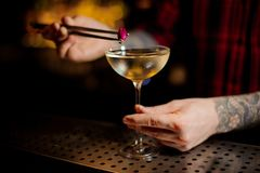 Barman hand decorating elegant cocktail with a little rose bud royalty free stock image