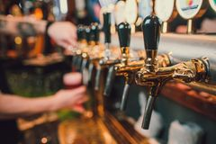 Barman hands pouring a lager beer in a glass. royalty free stock images