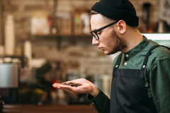 Barman holds in a palm grain of coffee Stock Image
