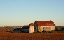 Barn. Old barn in the morning Royalty Free Stock Photo