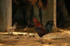 At the barn Royalty Free Stock Photo