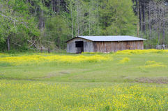 Barn amid wildflowers. Old barn sitting among wildflowers and trees stock images