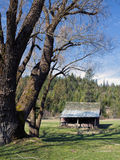 Barn And Trees. Stock Photos