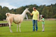 Barn avlar och hans lite matande lama för sonen Royaltyfri Fotografi