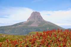 Barn Bluff with heath in front. Barn Bluff, an iconic peak on the famous Overland Track in Tasmania, Australia, with focus on flowering heath in the foreground Royalty Free Stock Photos