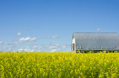 Barn in Canola Field Wide Stock Photography