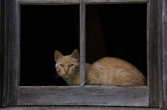 Barn cat framed Royalty Free Stock Photos