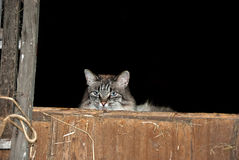 Barn cat in hay loft Stock Photo