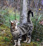 Barn Cat Rubbing on Fence Post royalty free stock photo